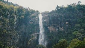 Tiro medio hermoso, fondo del paisaje de la cascada grande de la selva que acomete abajo en el bosque sin tocar exótico de Sri La metrajes