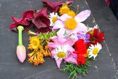 Tiro micro de la flor Foto de archivo libre de regalías