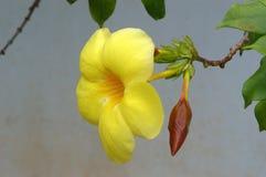 Tiro micro de la flor Fotografía de archivo