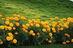 Tiro micro de la flor Imagen de archivo libre de regalías