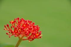 Tiro micro de la flor Imágenes de archivo libres de regalías