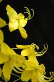 Tiro micro de la flor Imagenes de archivo