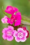 Tiro micro de la flor Fotos de archivo