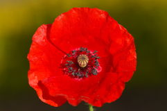 Tiro micro de la flor Imagen de archivo