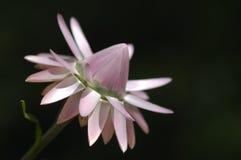 Tiro micro de la flor Fotos de archivo libres de regalías
