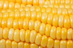 Tiro micro: detalles del maíz Imagenes de archivo