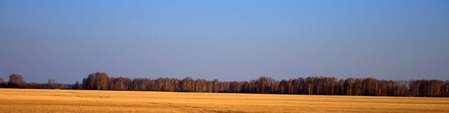 Tiro panorâmico do campo na frente da terra arável, com as estátuas das colheitas do ano passado imagem de stock royalty free