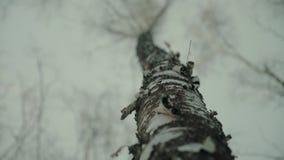 Tiro panorâmico dos troncos de árvores de vidoeiro na floresta do inverno vídeos de arquivo