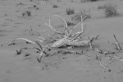 Tiro preto e branco de uma paisagem seca, árida do deserto imagem de stock royalty free
