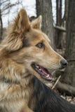 Tiro principal de un perro fotografía de archivo libre de regalías