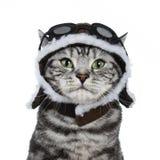 Tiro principal del gato negro hermoso de británicos Shorthair del gato atigrado con los ojos verdes que llevan el sombrero experi Foto de archivo libre de regalías