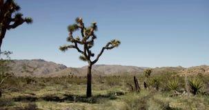 Tiro que viaja de la escena del desierto con las montañas, el cactus y los árboles espinosos en primero plano almacen de video