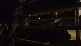 Tiro silueteado del toro y del jinete metrajes