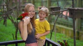 Tiro slowmotion super de uma mãe e de um filho em um parque do pássaro para alimentar um grupo de papagaios verdes e vermelhos co video estoque