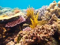 Tiro subacuático de la visión del arrecife de coral foto de archivo