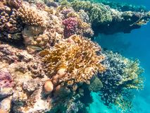 Tiro subacuático de un arrecife de coral en el Mar Rojo Fotografía de archivo