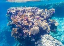 Tiro subacuático de un arrecife de coral en el Mar Rojo Imagen de archivo