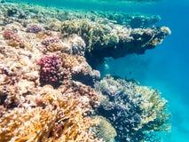 Tiro subacuático de un arrecife de coral en el Mar Rojo Foto de archivo libre de regalías