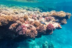 Tiro subacuático de un arrecife de coral en el Mar Rojo Fotos de archivo libres de regalías