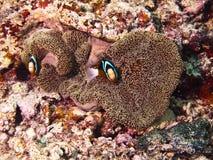 Tiro subacuático del arrecife de coral fotos de archivo
