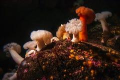 Tiro subaquático de criaturas inferiores vívidas do oceano Foto de Stock Royalty Free