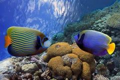 Tiro subaquático do recife de corais vívido Fotografia de Stock