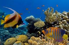 Tiro subaquático do recife de corais vívido com peixes fotografia de stock