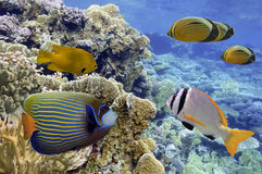 Tiro subaquático do recife de corais vívido com peixes Imagens de Stock Royalty Free