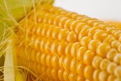 Tiro vegetariano jugoso brillante del maíz sobre el fondo blanco foto de archivo libre de regalías