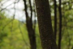 Tiro verde de la foto de Forest Leaves And Branches Background Imágenes de archivo libres de regalías