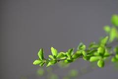 Tiro verde fresco Immagine Stock Libera da Diritti