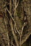 Tiro vertical da casca de árvore fotografia de stock royalty free