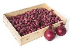 Tiroir rempli d'oignons destinés à la plantation Photo stock