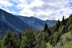Tirol mountains. Austrian Mountains with needle trees Stock Photo