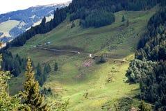 Tirol mountains. Austrian Mountains with needle trees and grassland Stock Photo