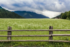 Tirolean Alps. The alps in tirol, green meadows, blue skies and mountains covered with clouds Stock Image