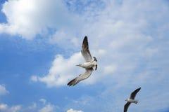 Tirones del pájaro encima en el cielo Imagenes de archivo