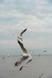 Tirones del pájaro encima en el cielo Fotos de archivo