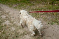 Tirones del perro en el correo Imagen de archivo libre de regalías