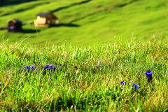 Tirools bergweiland Stock Afbeelding