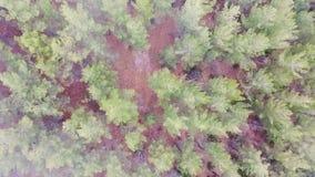 Tiros aéreos: O alvorecer enevoado nos cervos do parque nacional flui vídeos de arquivo
