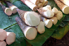 Tiros de bambu foto de stock