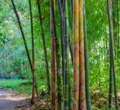Tiros de bambu Fotografia de Stock Royalty Free