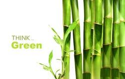 Tiros de bambu empilhados no branco Fotos de Stock
