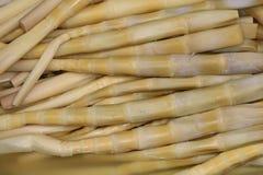 Tiros de bambu fermentados Foto de Stock