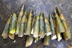 Tiros de bambu no concreto Fotografia de Stock