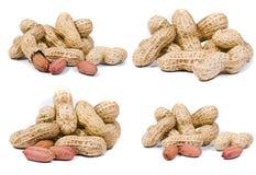 Tiros de la macro de los cacahuetes Fotografía de archivo libre de regalías