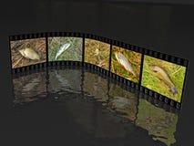Tiros de la naturaleza Imagenes de archivo