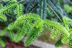 Tiros do verde de uma planta na mola Imagem de Stock