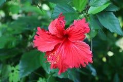 Tiros macro coloridos das flores na ilha de Seychelles fotografia de stock royalty free